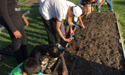 Die zweiten Klassen gehen auf die City Farm!